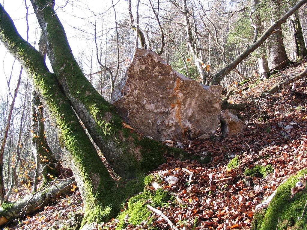 Effet protecteur de la forêt - Bloc arrêté par un tronc d'arbre