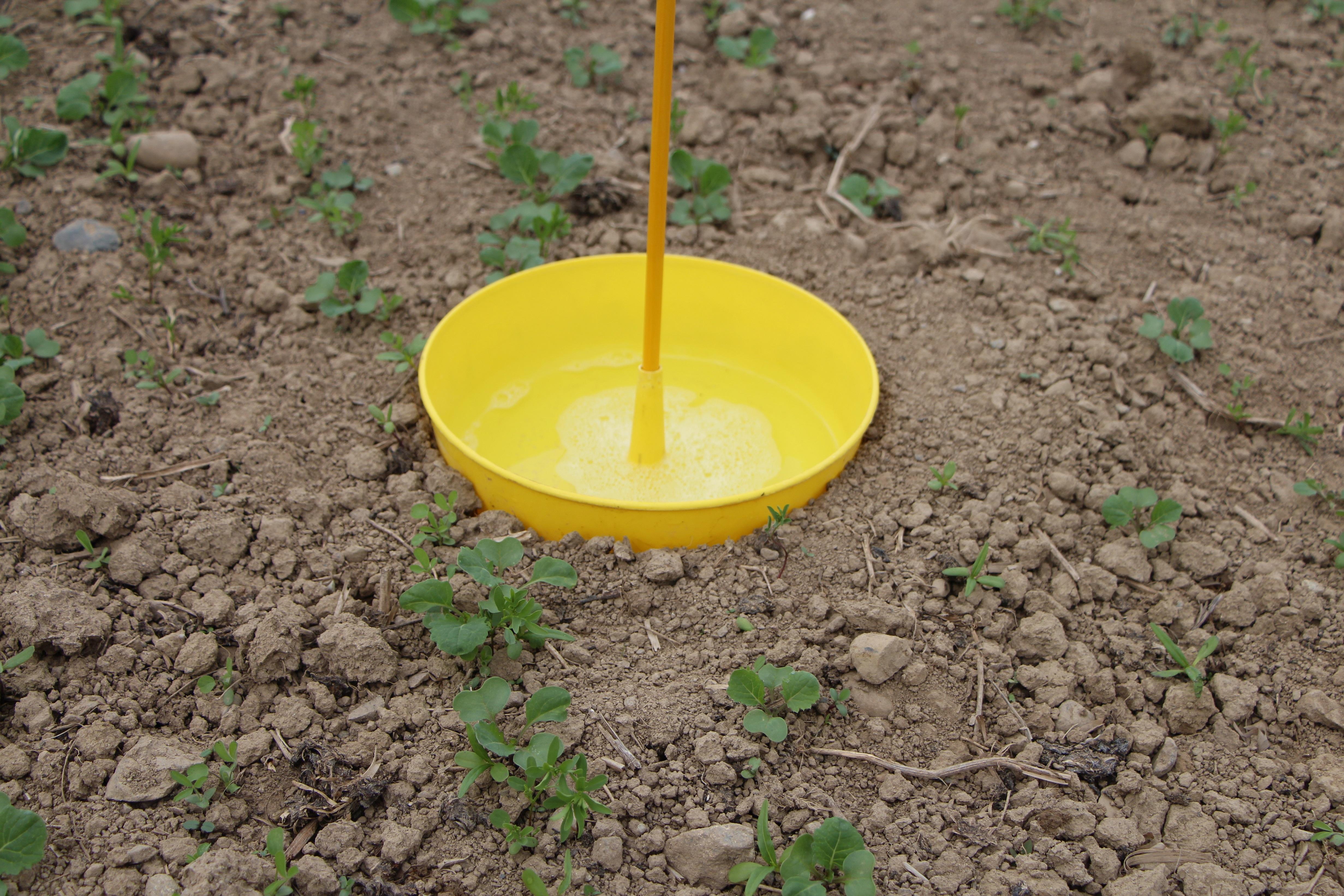 Pflanzenschutz-Bulletin