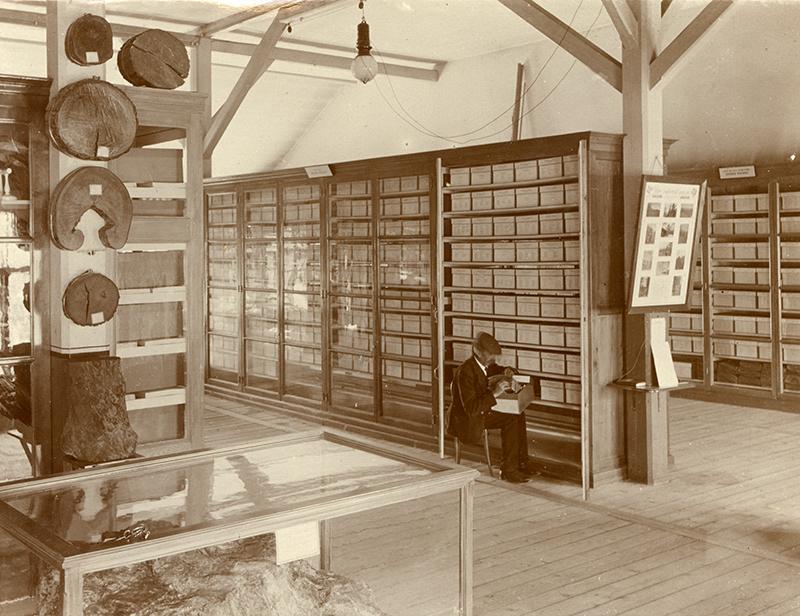 Firmin Jaquet in der Herbarien, 1923