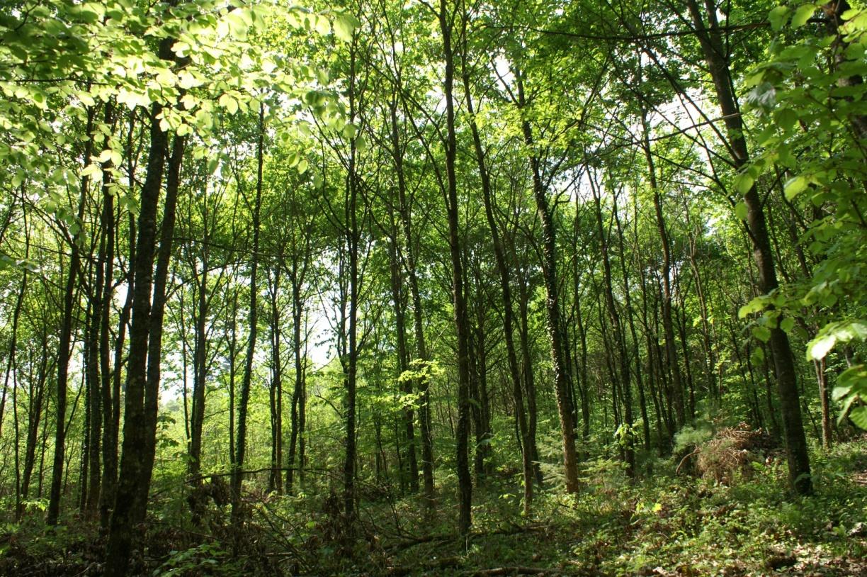 La forêt domaniale Galm