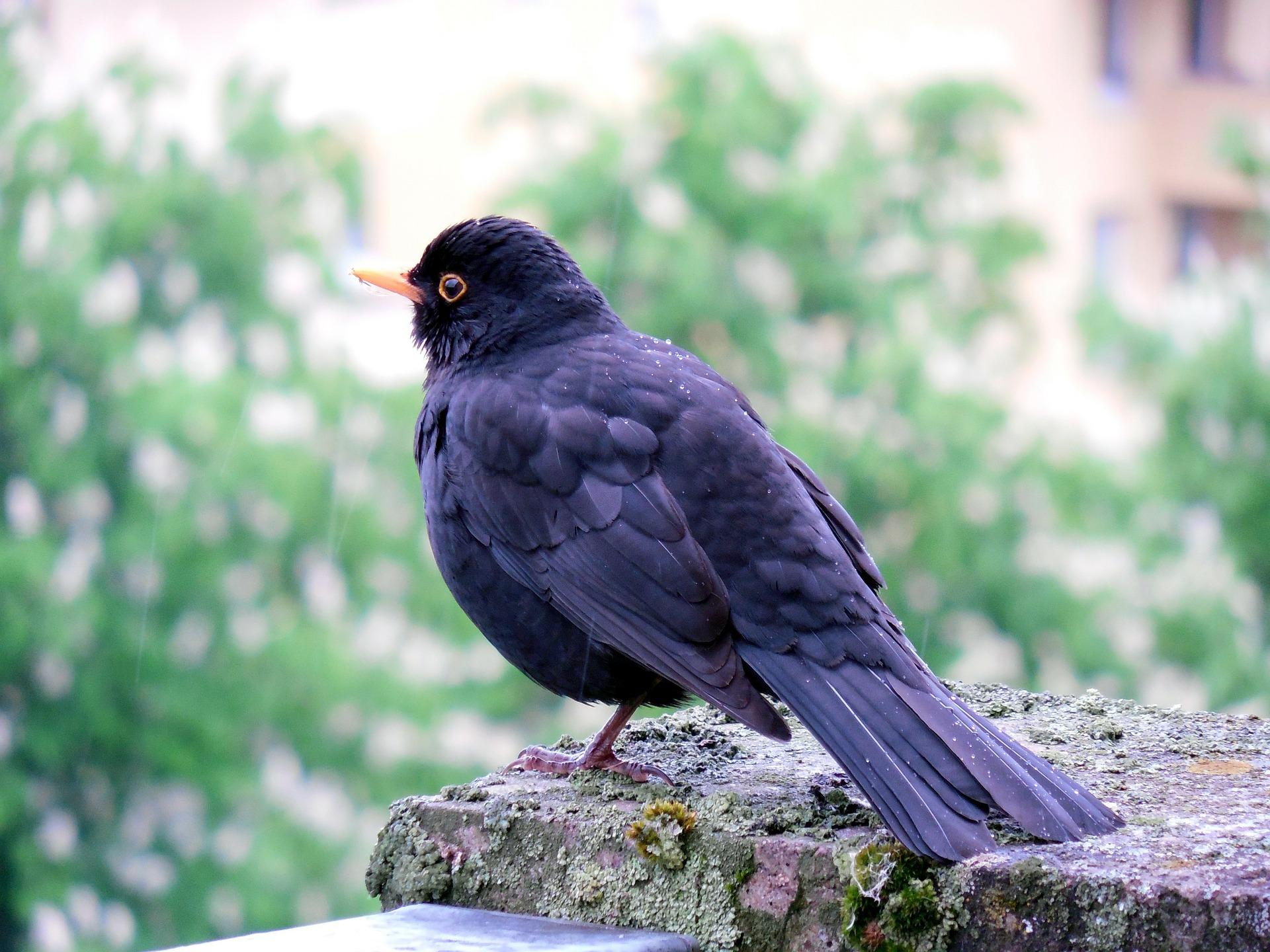 photo d'un oiseau