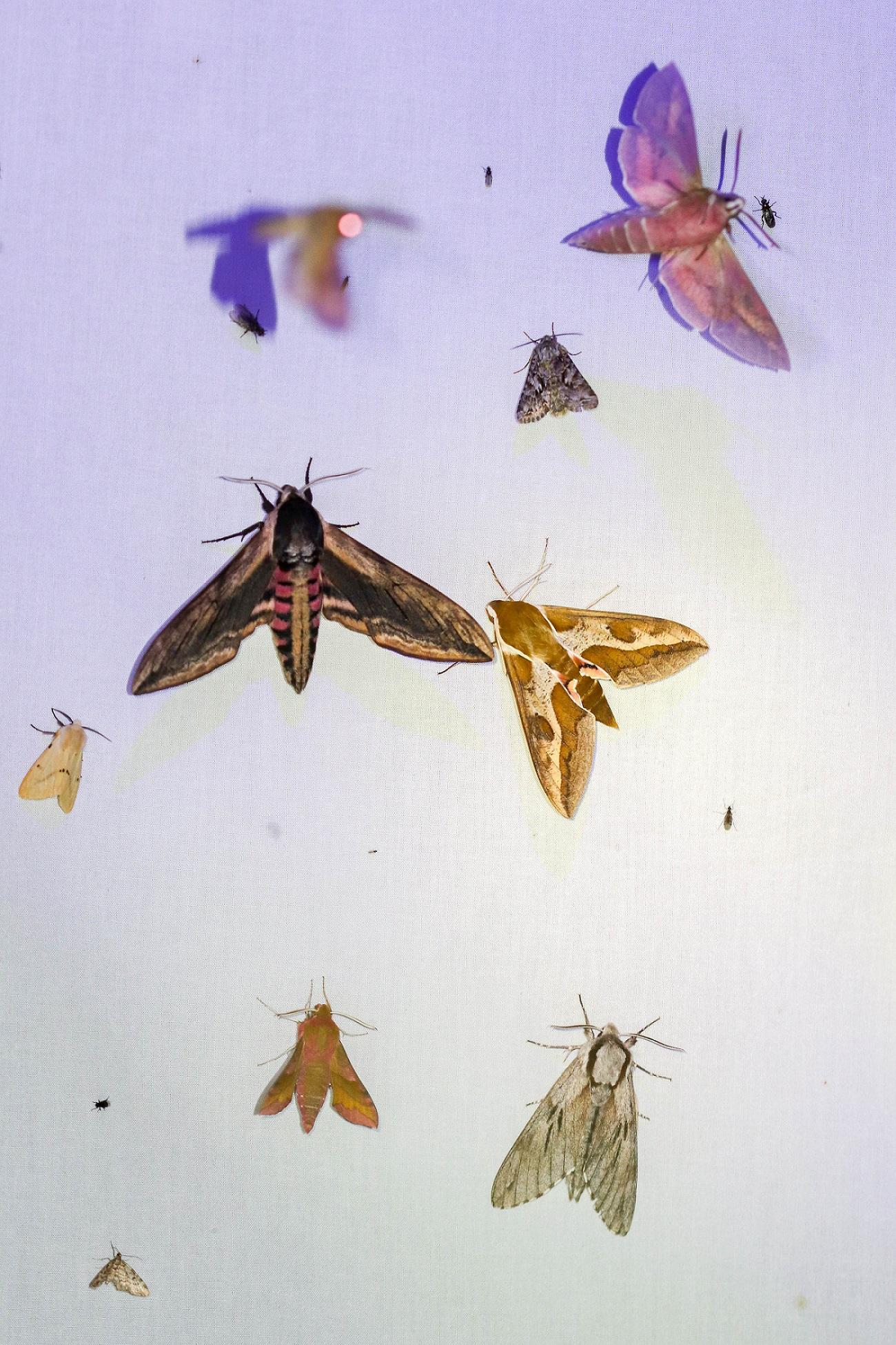 Die Vielfalt der Arten erreichte ihren Höhepunkt um 1.30 Uhr morgens