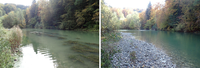 Kleine Saane, Hauterive, vor und nach dem Wasserablass