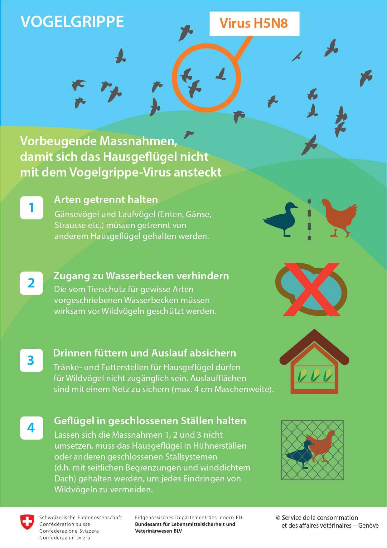 Infografik Vogelgrippe
