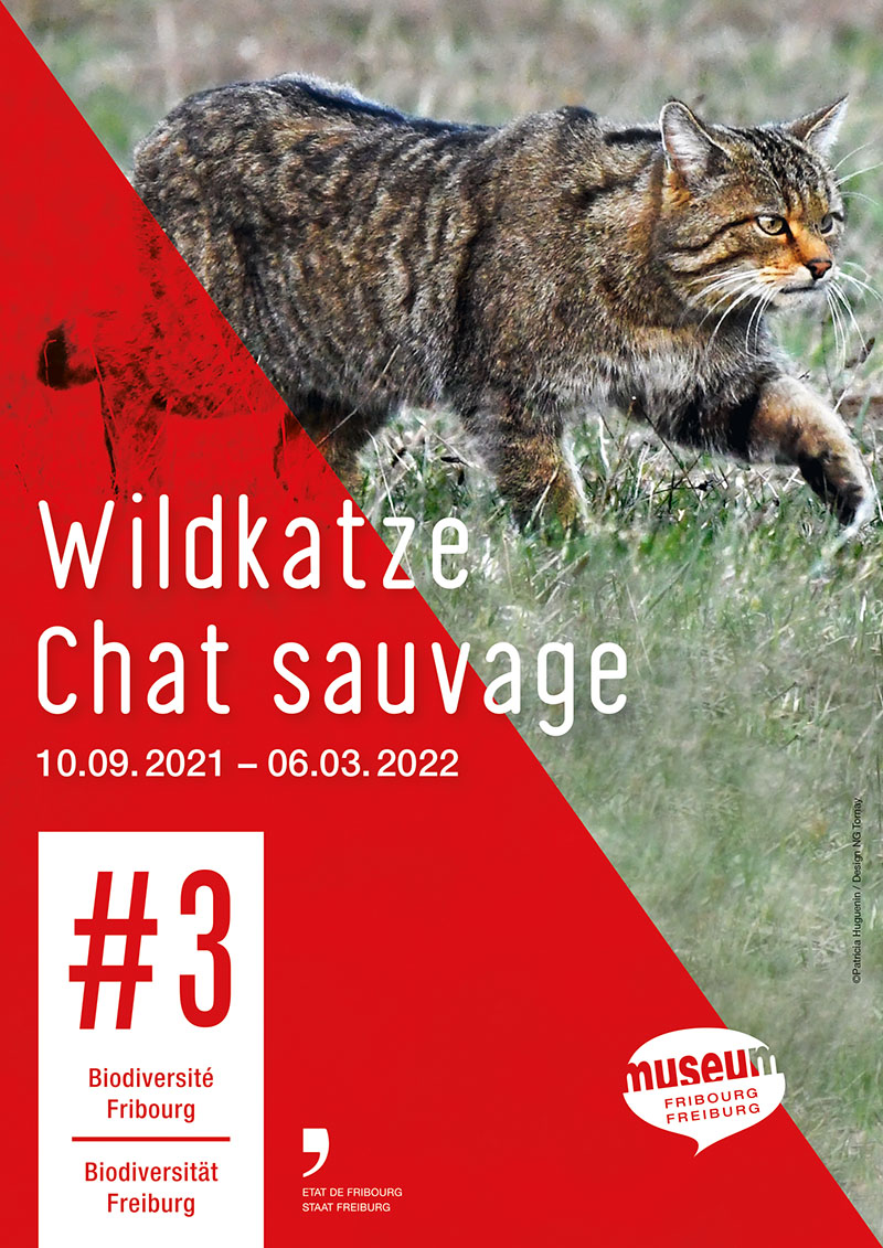 Chat sauvage - #3 Biodiversité Fribourg (affiche)