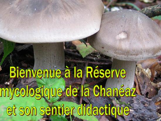 Bienvenue dans la réserve mycologique de la Chanéaz