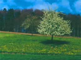 Einzelbäume_BPNP