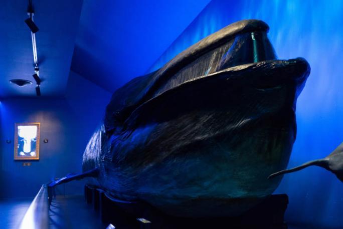 Salle des Vertébrés - Baleine naturalisée