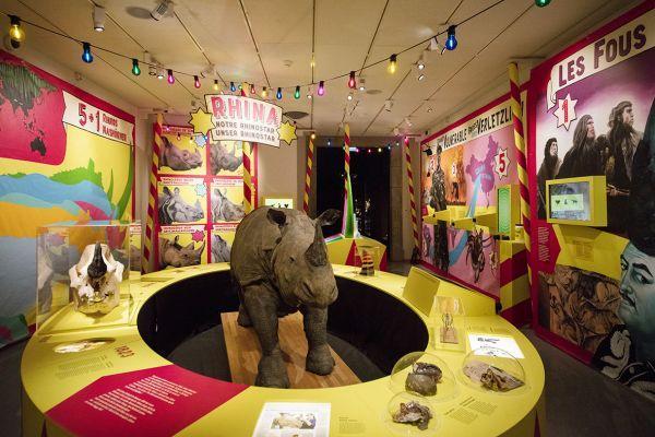 Exposition Rhinostar