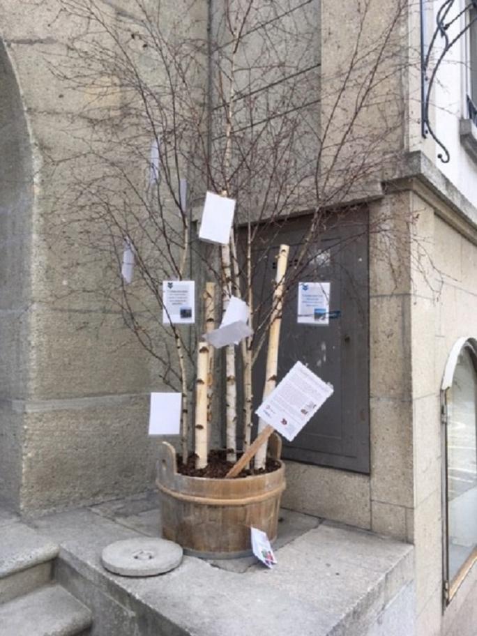 Baum mit Zeugenaussagen Estavayer