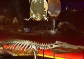 Vertébrés du monde - Vitrine des squelettes
