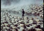 Turquie, Cappadoce, moutons dans la vallée d'Ihlara, 1978