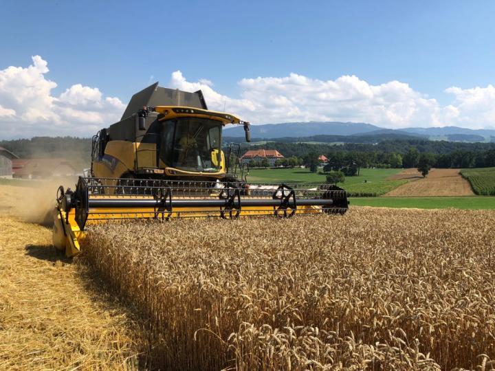 Moisson de blé, Grangeneuve