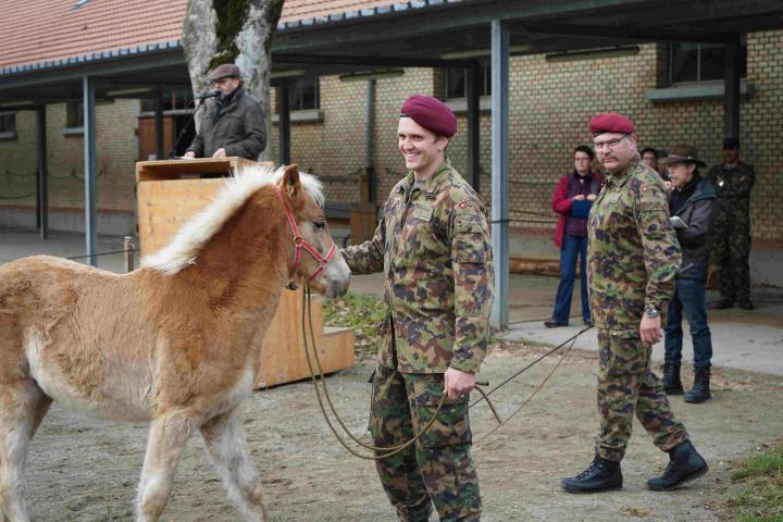 Cheval de race haflinger tenu par un soldat de l'armée suisse