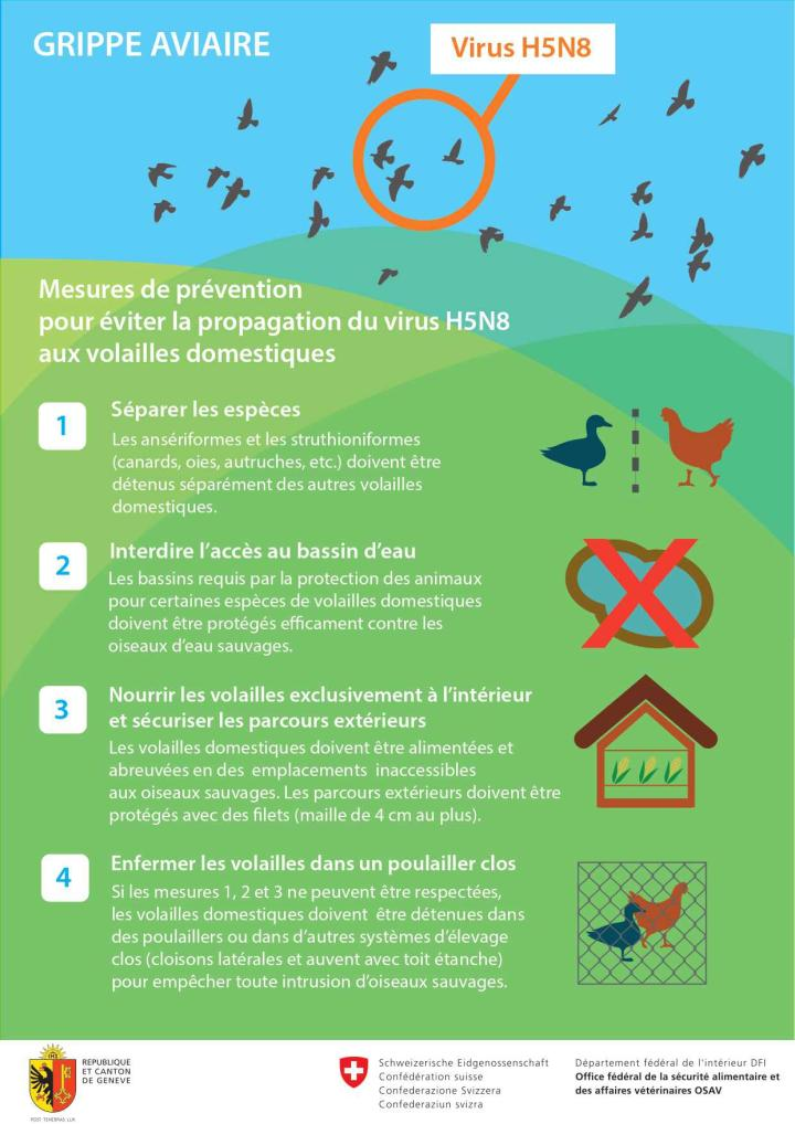 Infographie grippe aviaire