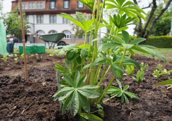 Jardin du vivre ensemble à Schmitten