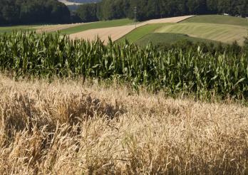 Landwirtschaftliche Böden