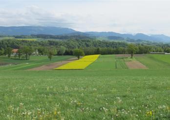 Das Bild zeigt den landwirtschaftlicher Betrieb Grangeneuve