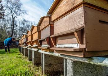 Photo illustrant les ruchers de Grangeneuve