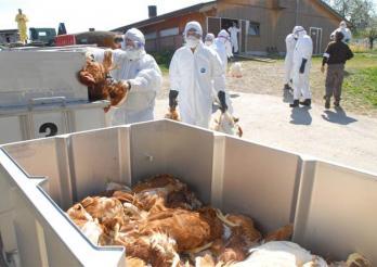 Vogelgrippe-Übung, Ueberstorf, 2007