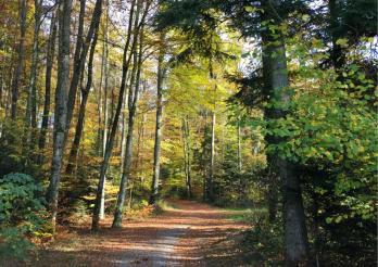 Forêt - Wald, bois de la Faye, Granges-Paccot