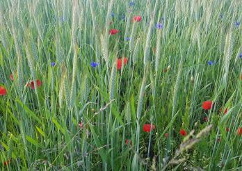 Séances d'informations phytosanitaires