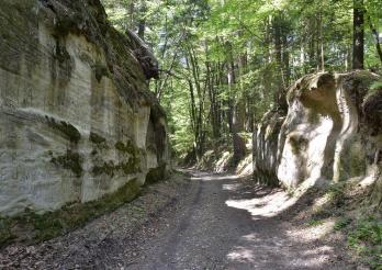 Montagny-les-Monts, chemin creux du bois de la Bruyère, passage creusé dans la molasse.