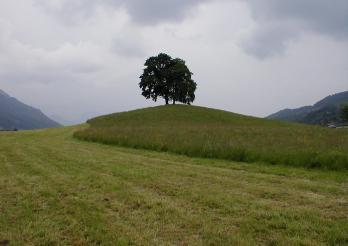 Des arbres isolés sur une petite colline
