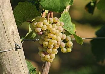 Weinbau-Kataster