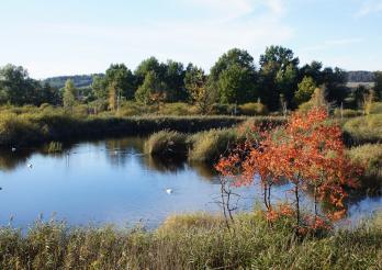 Les marais de Guin en automne