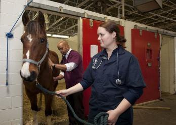 deux vétérinaires prennent soin d'un cheval