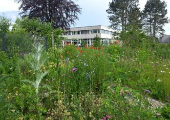 Illustration du jardin pédagogique de Grangeneuve