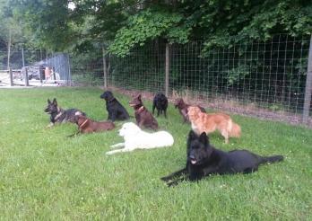 La photo représente neuf chiens