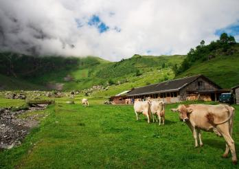 La photo représente des vaches devant un chalet d'alpage