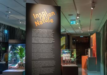 Exposition / Sonderausstellung Inspiration Natur-e