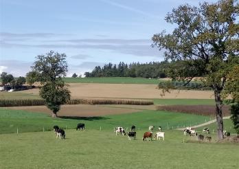 L'image illustre des vaches