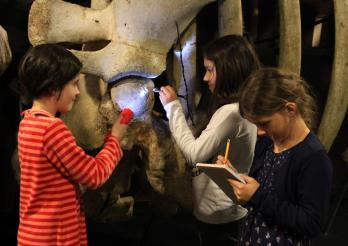 enfants au musée d'histoire naturelle en train d'observer un squelette