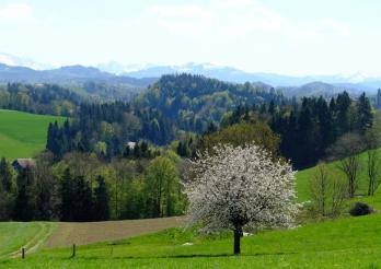 Landschaft Hostettlen bei Ueberstorf oberhalb des Sensegrabens