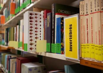 Bibliothek NHMF