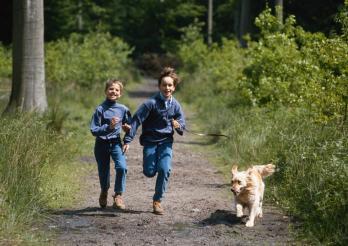 Mit dem Hund im Wald...