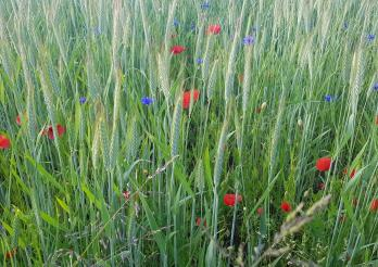 Pflanzenschutzfachtagung