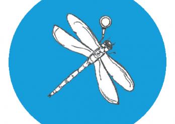 À la pêche aux libellules