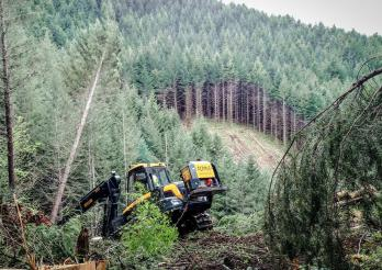 Bergholztage