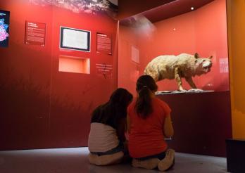 Schüler im Museum