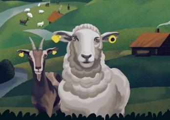 Das Bild zeigt eine Ziege und ein Schaf