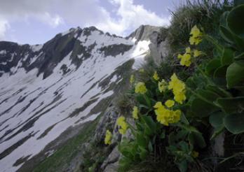 Das Naturschutzgebiet Vanil Noir