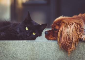 L'image montre un chien et un chat