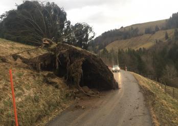 Le canton de Fribourg fortement touché par la tempête « CIARA »/ Der Kanton Freiburg wurde vom Sturm «SABINE» heimgesucht