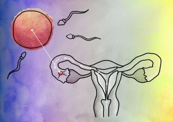 Rencontre ovule spermatozoïde