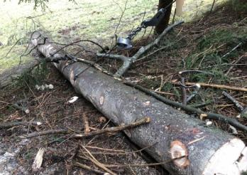 Un jeune homme blessé dans un accident de bûcheronnage à Charmey / Ein Mann verletzt sich bei einem Holzfällerunfall in Charmey